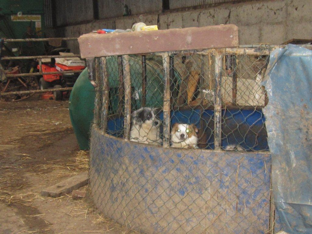 Puppy farm in North Cork
